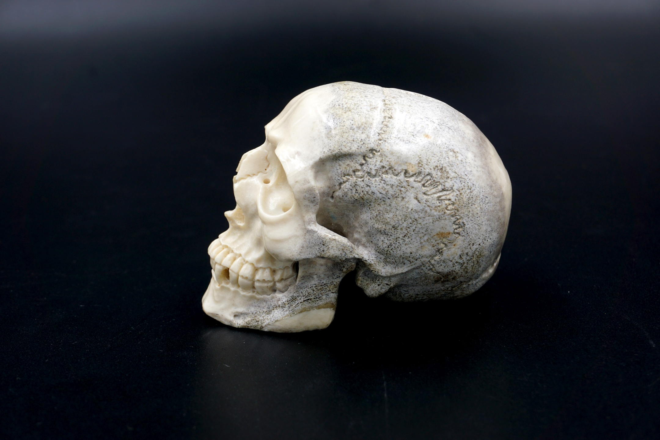 Geoclassics Moose Antler Skull