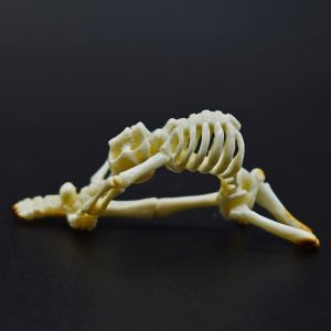 Skeleton back bend carved from fossil ivory
