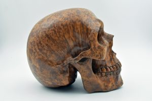 Burl wood skull carving