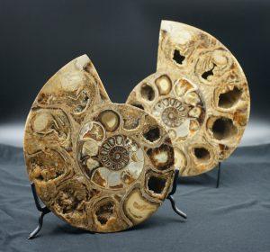 Ammonite, Madagascar split pair