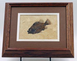 Fossil fish, Priscacara framed