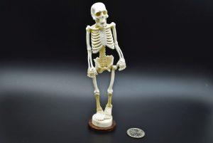 Skeleton carved from moose antler on a wooden base