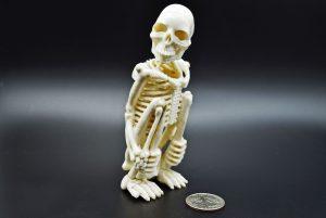 Skeleton carved from moose antler