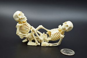 Skeletons sitting of moose antler